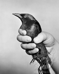 Close-up of a person's hand holding a bird